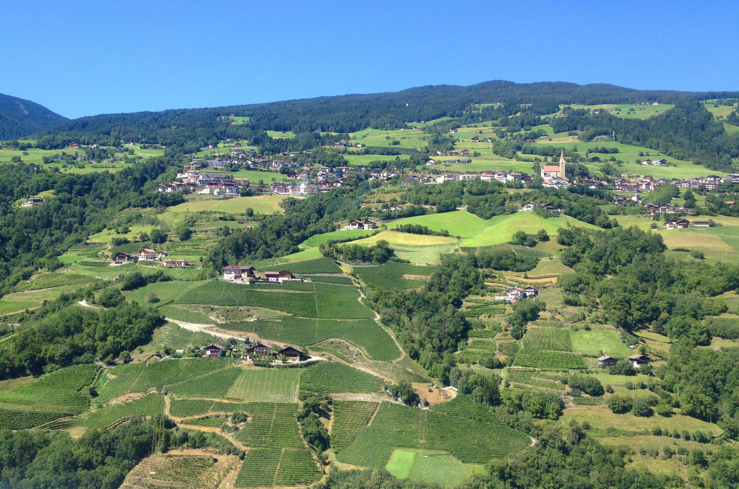 Südtiroler Weinberg