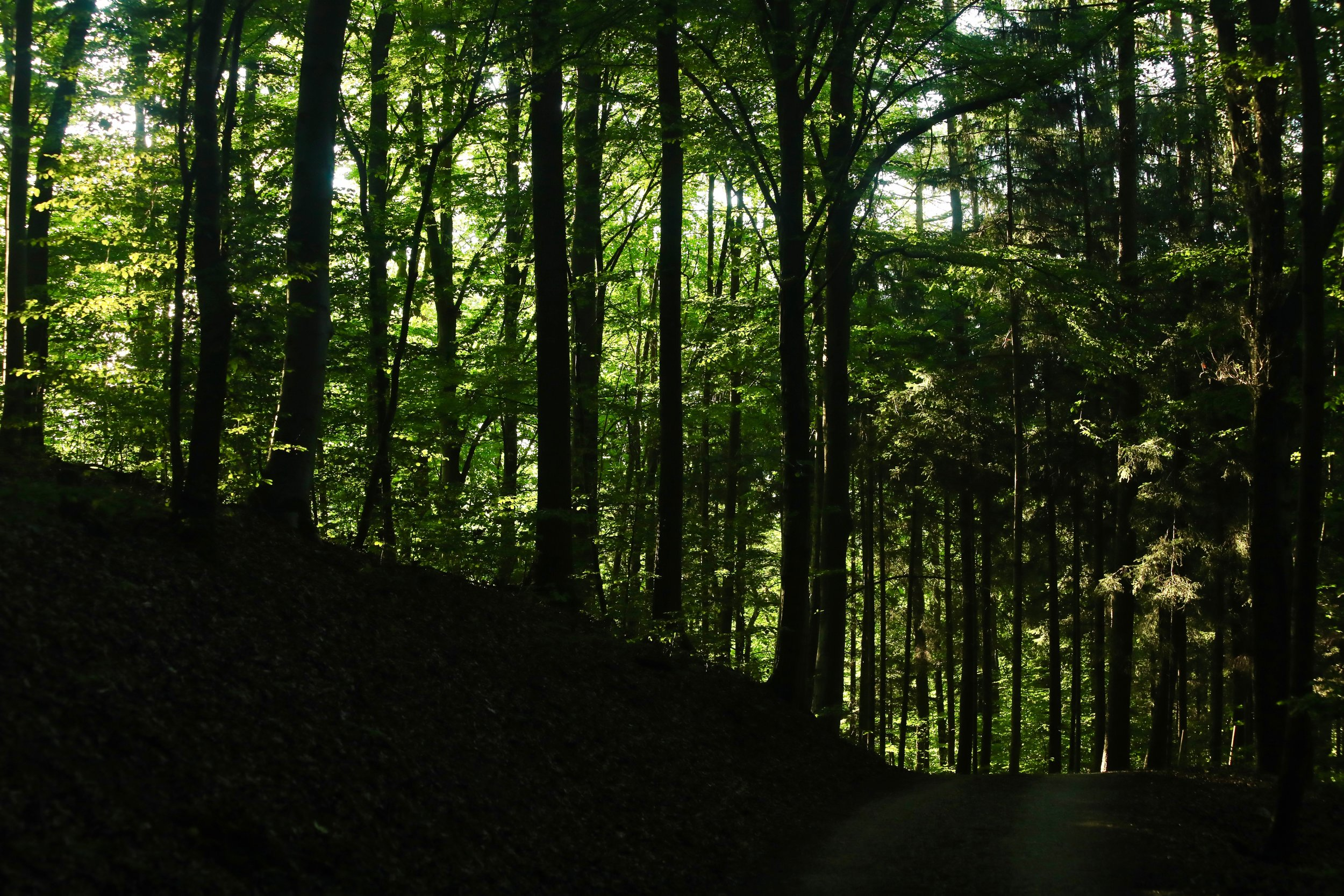 Grünes Licht im Wald
