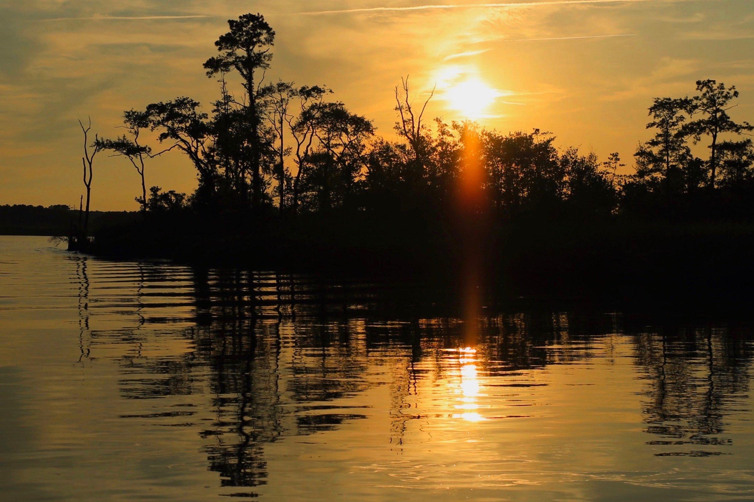 Golden Chesapeake