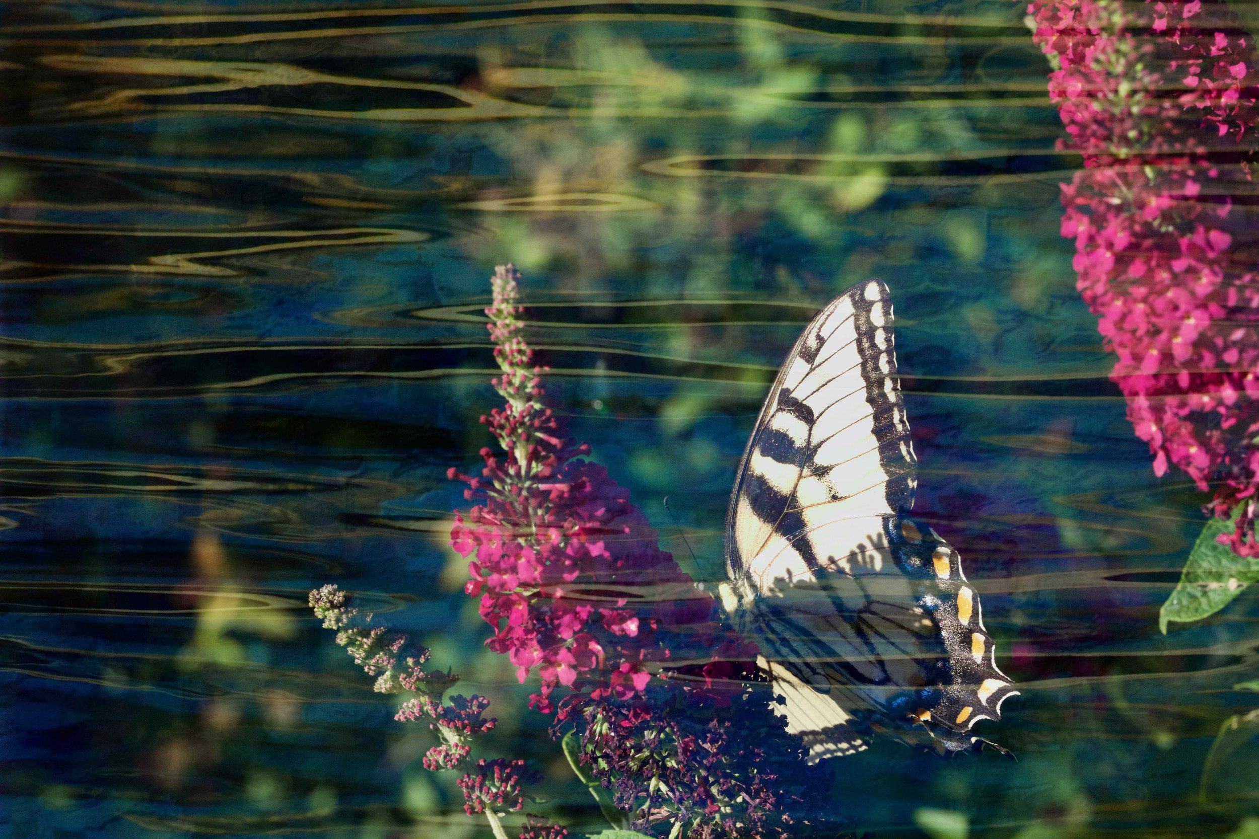 Blue and Swallowtail 2.jpg
