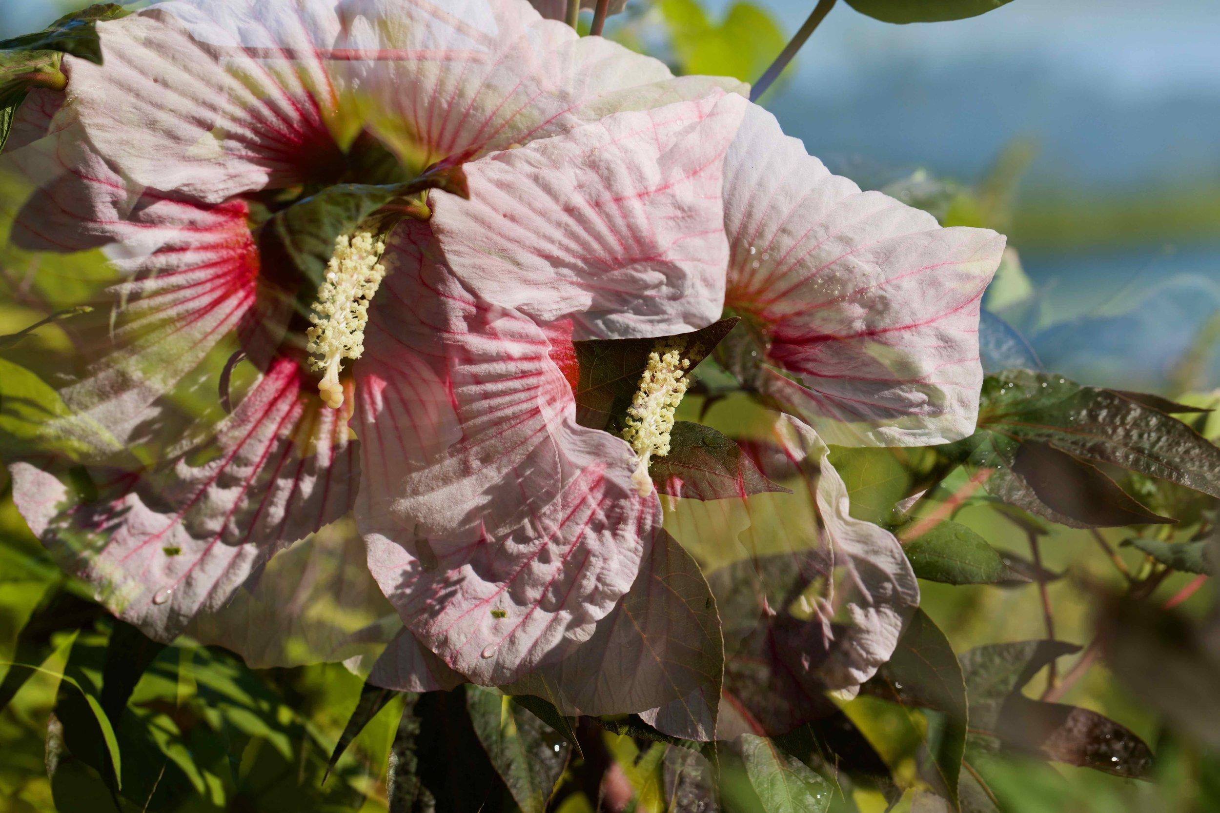 August Bloom