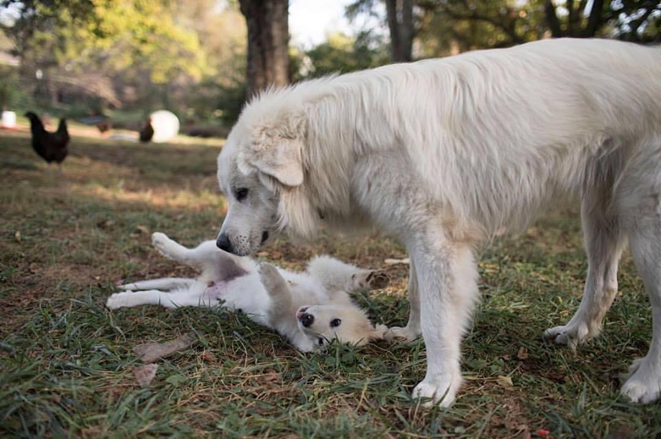 Berganza and baby Magnolia, fall 2015.