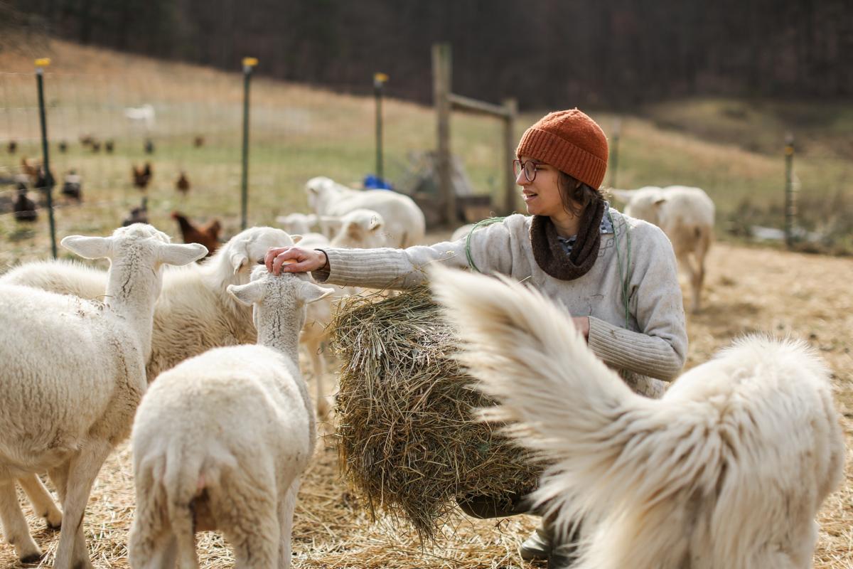 Grass Fed Lamb — Deep Mountain farm
