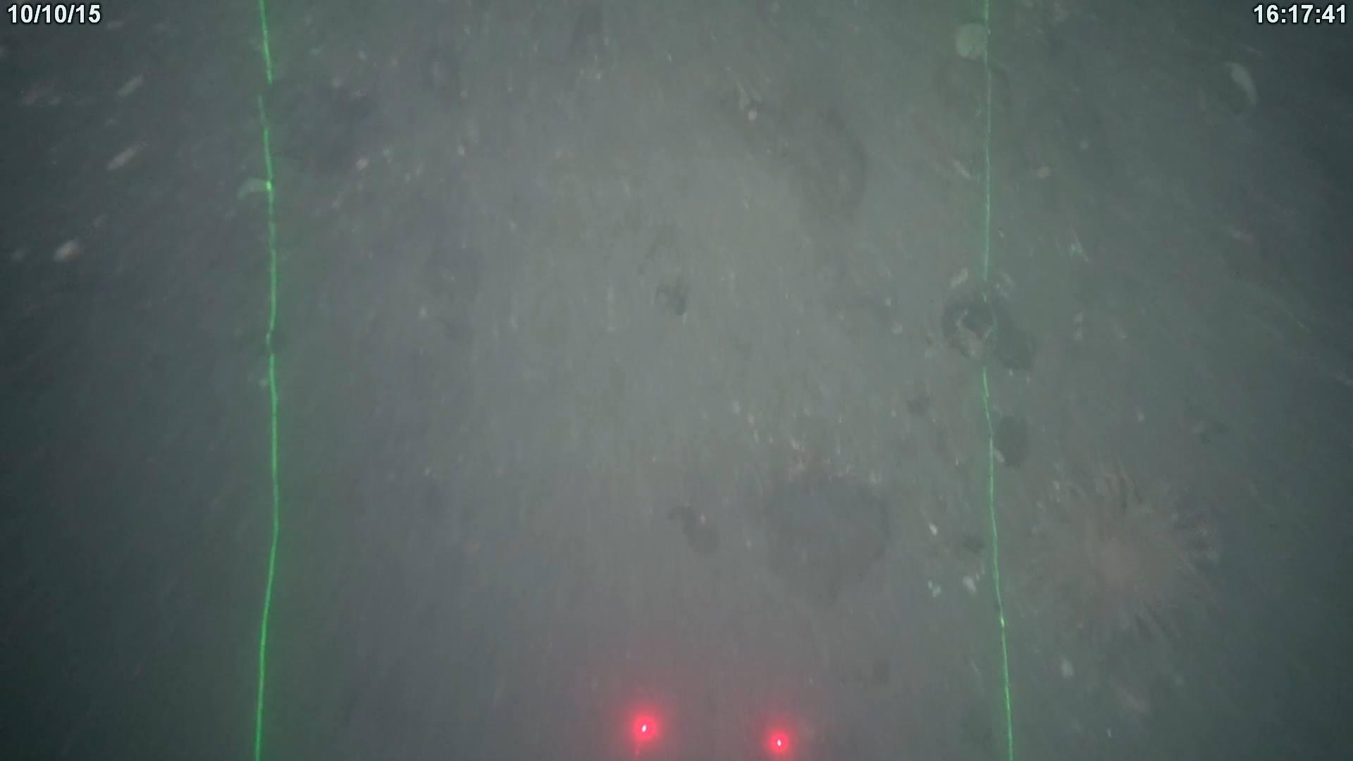 Savante Subsea Laser Modules during benthic survey