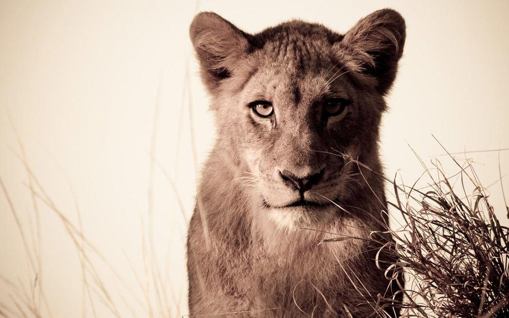 Lionne Chitwa