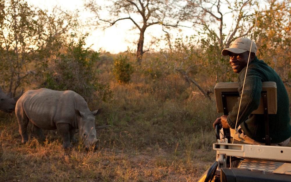 Rhinocéros Chitwa