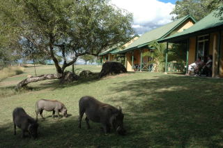 Hippopotames Kirkman's Camp