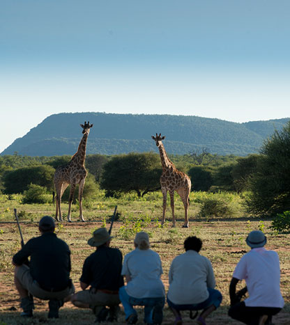 Safari à pieds Marataba Trails Lodge