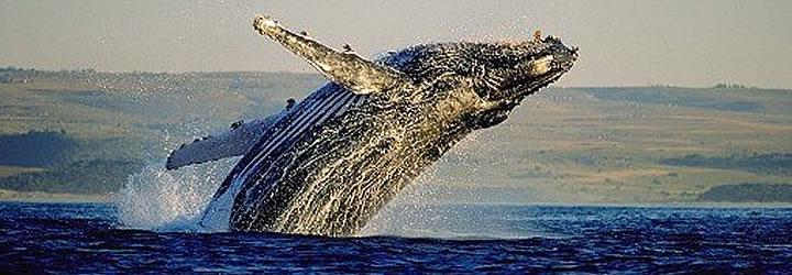 Baleine  De Kelders Private Retreat