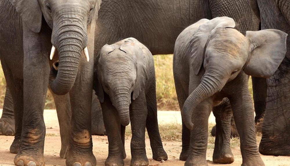 Troupeau d'éléphants Réserve Privée de Phinda