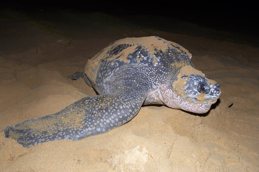Tortue de nuit Kosi Forest Lodge