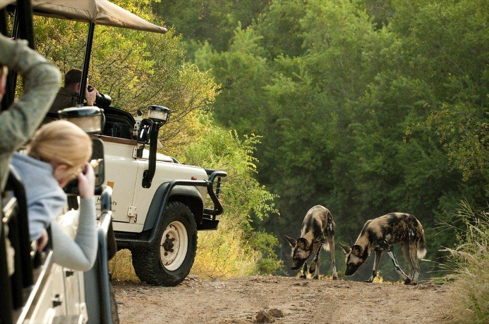 4X4 en safari avec chiens sauvages Morukuru Family