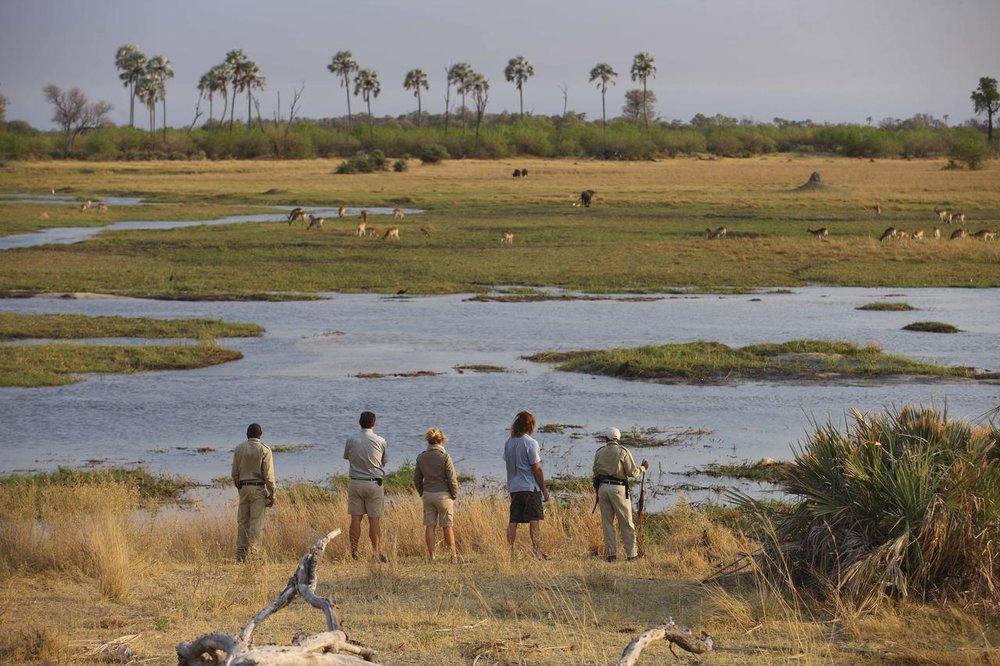 Safari à pieds Sandibe Safari Lodge