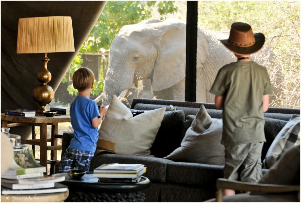 Enfants regardent élephant Machaba Camp