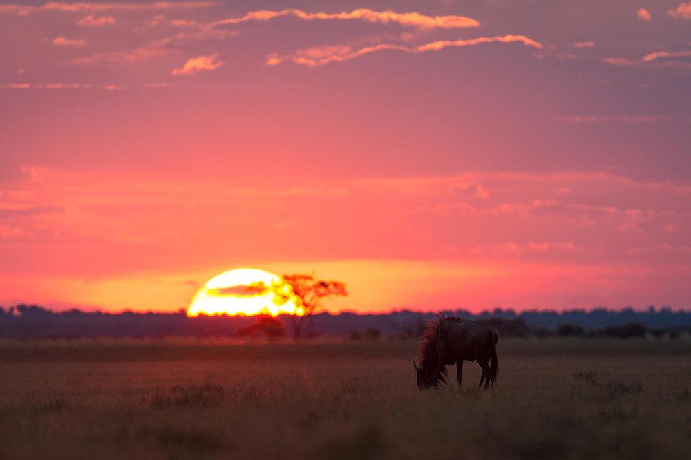 Coucher de soleil Kalahari Plains Camp