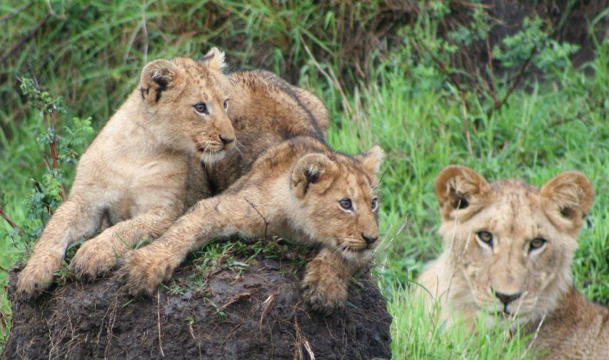 Famille de Lions Governor's Camp