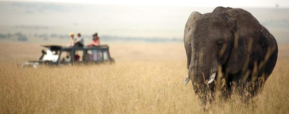 Safari en 4X4 devant éléphant Rekero Mara Camp