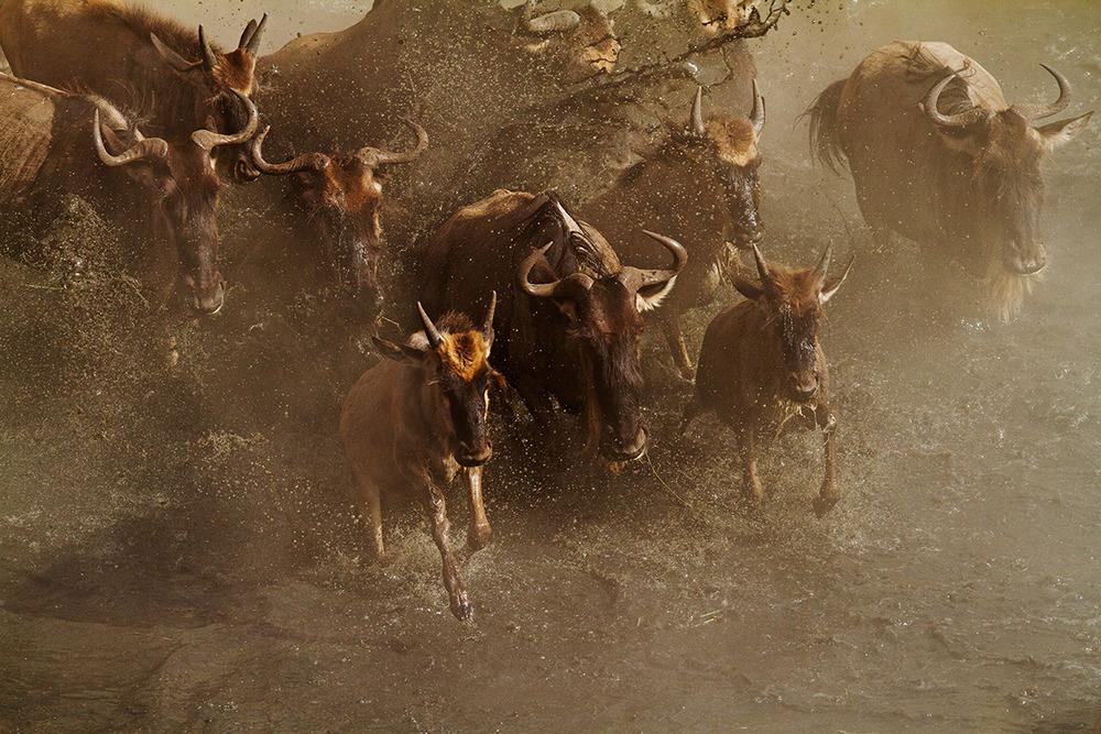 Migration Angama Mara