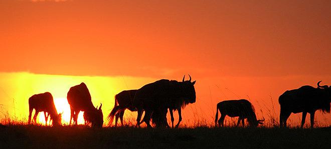 Coucher de soleil sur troupeau Speke's Camp