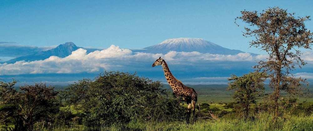 Giraffe Campi ya Kanzi