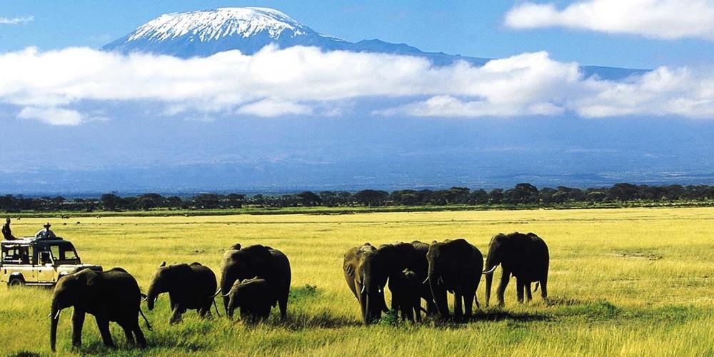 Troupeau d'éléphants Tortilis Camp