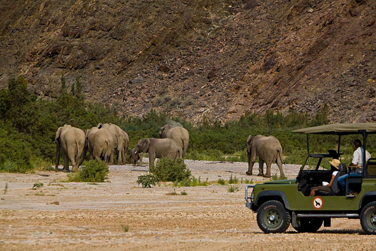 Eléphants du désert Okahirongo Elephant Lodge