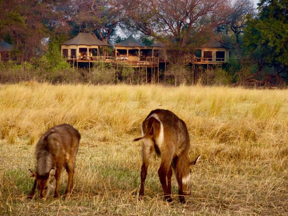 Gazelles devant Nambwa Tented Lodge