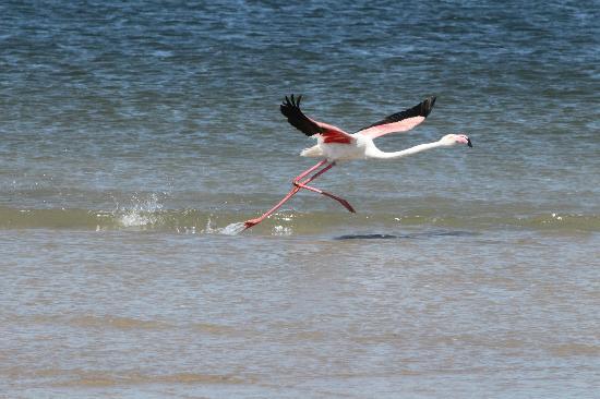 Pelican au Pelican Point Lodge