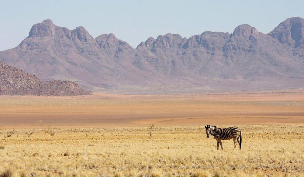 Zèbre dans le désert Wolwedans