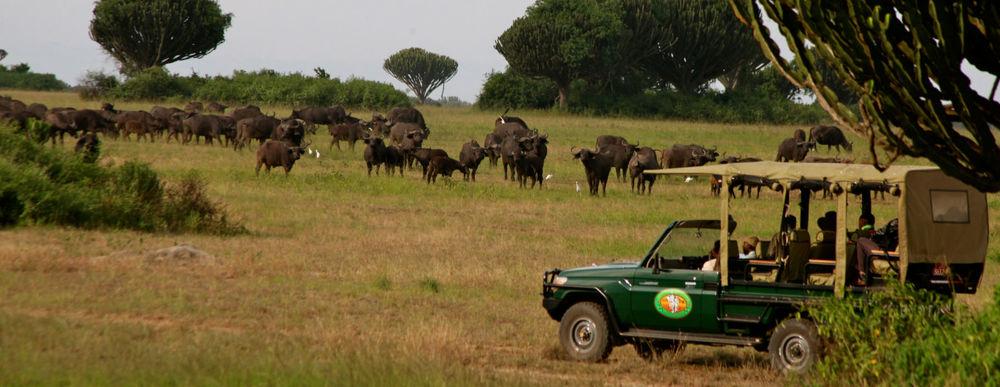 4X4 en Safari Mweya Safari Lodge
