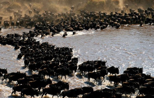 Migration Nomad Lamai Serengeti