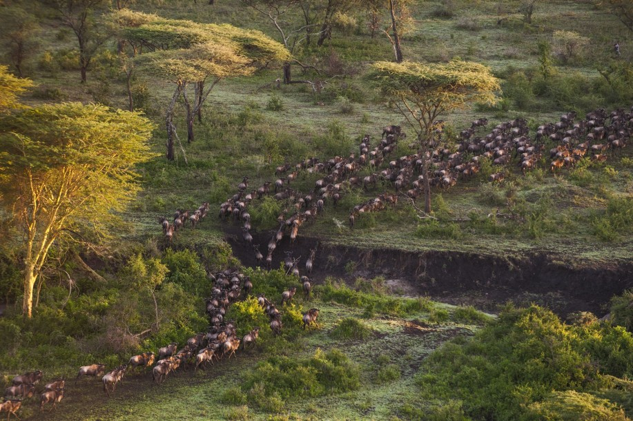 Migration Mwiba Lodge