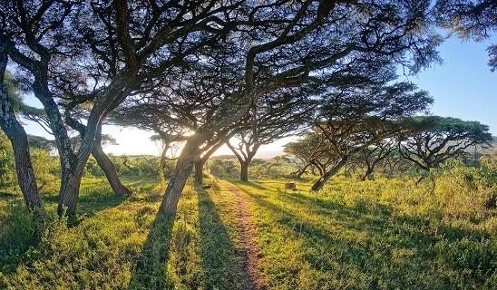 Rayons de soleil entre arbres Entamanu Ngorongoro Lodge