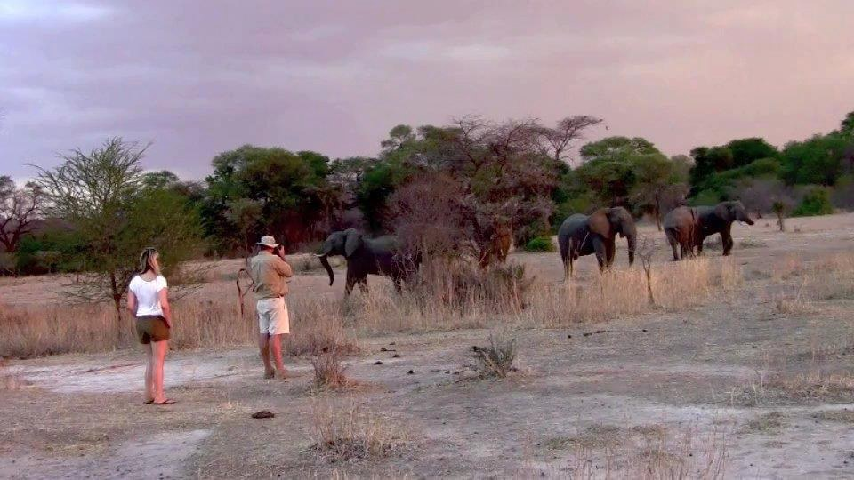 Eléphants au bord de la rivière Kichaka Ruaha