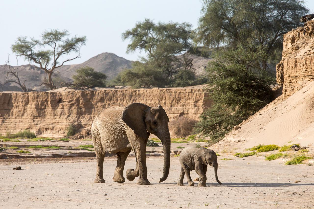 Famille d'éléphants Hoanib Skeleton Coast Camp