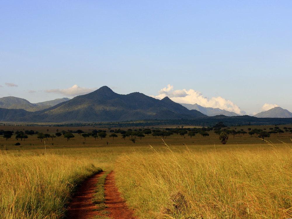 Troupeau de gnous Apoka Safari Lodge