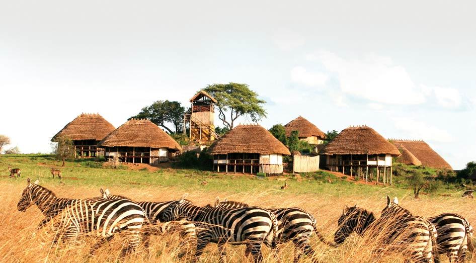 Troupeau de Zèbres devant Apoka Safari Lodge