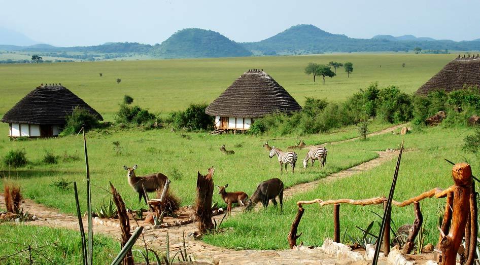 Vue sur bungalows Apoka Safari Lodge