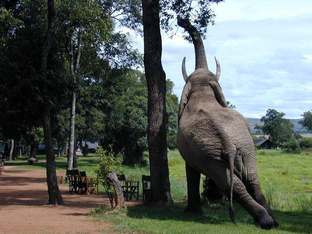 Voyage de noces Migration et Seychelles - Eléphant à Little Governor's