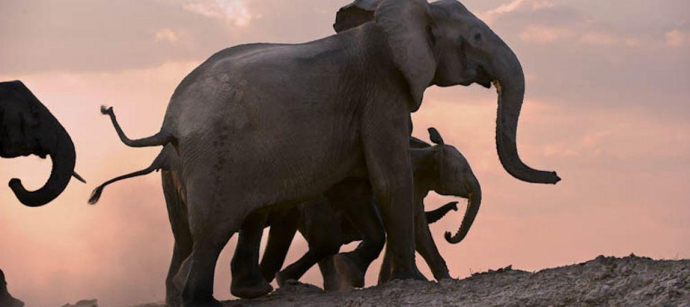 Safari Zambie et chute Victoria - éléphants