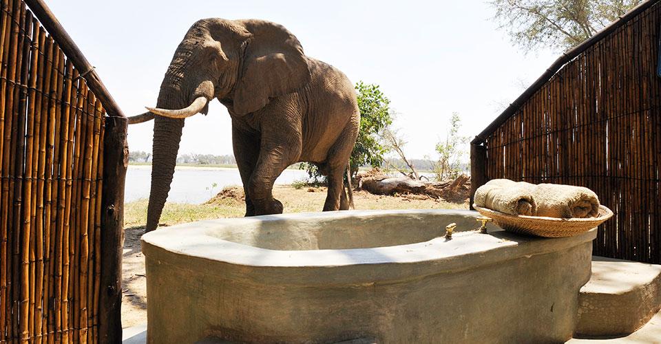 Safari le meilleur de la Zambie - Old Mondoro