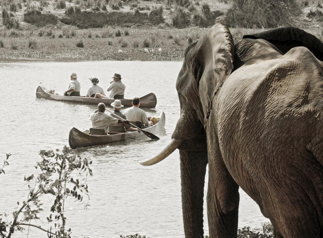Safari en canoës Chongwe River camp