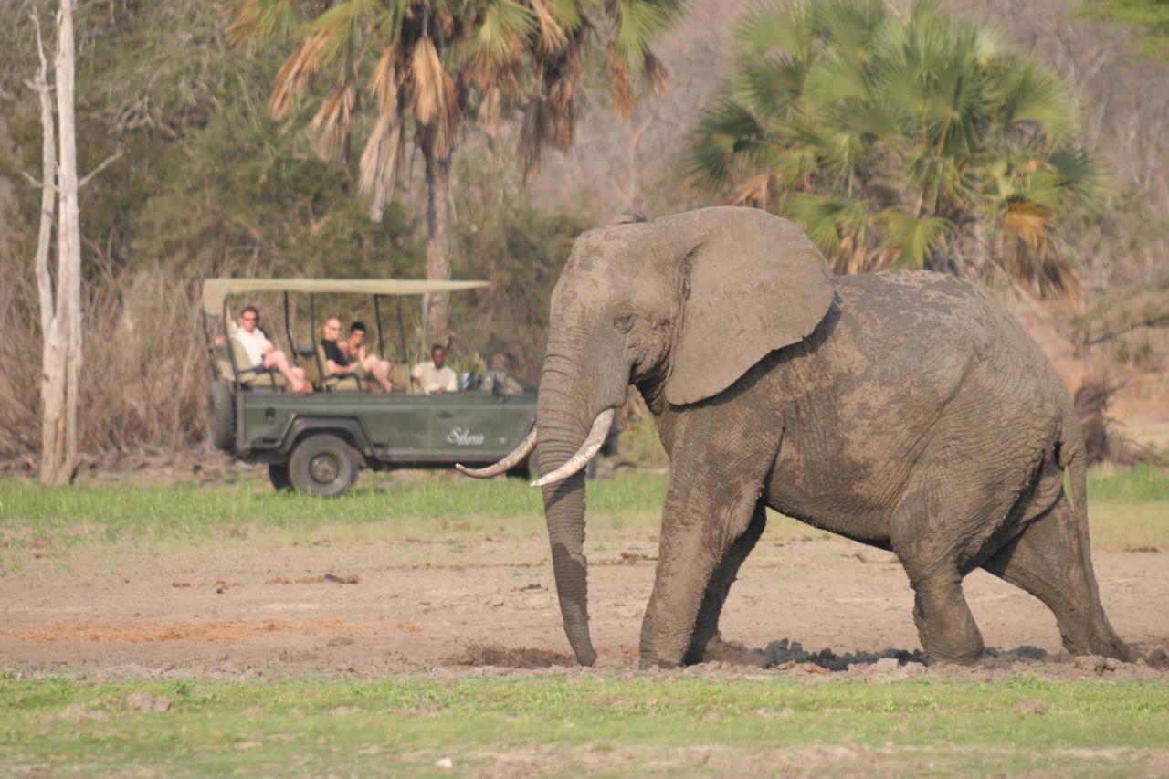 Safari à Siwandu