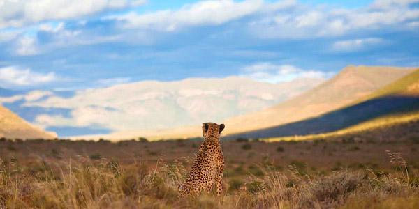 Voyage de noces Joyaux Sud Africain - Samara