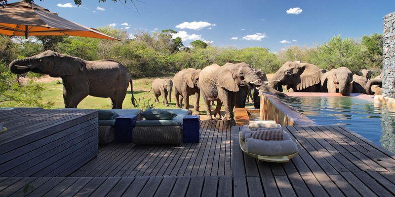 Voyage de noces Joyaux Sud Africain - Phinda