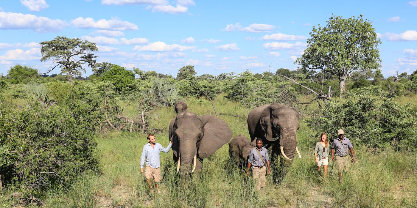 Marche avec éléphants Abu camp