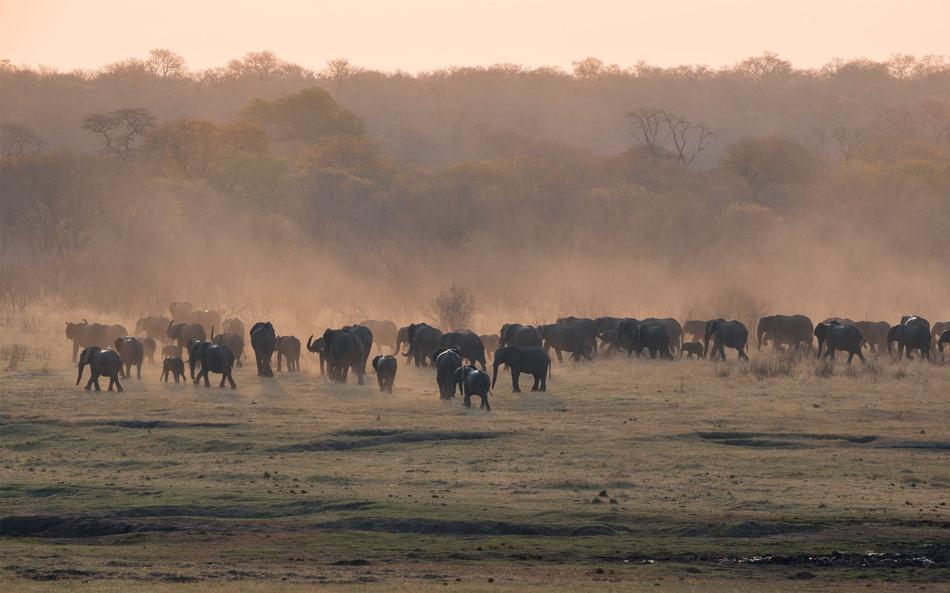 Eléphants au Matetsi River lodge