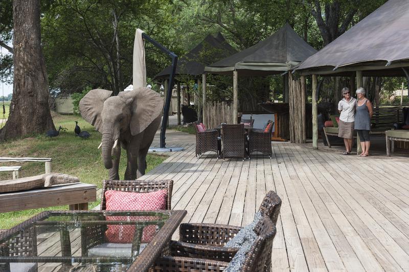 Eléphant dans le camp de Ruckomechi