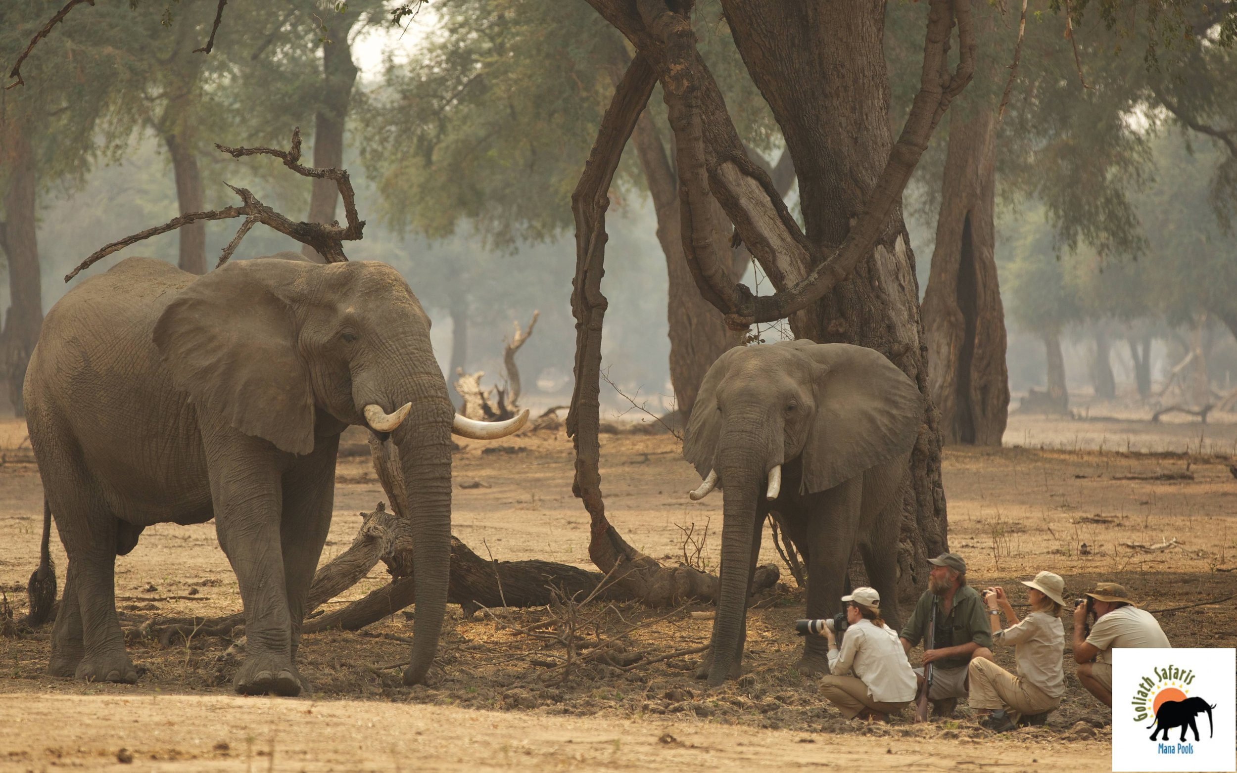 Safari à pied au Goliath Safaris camp