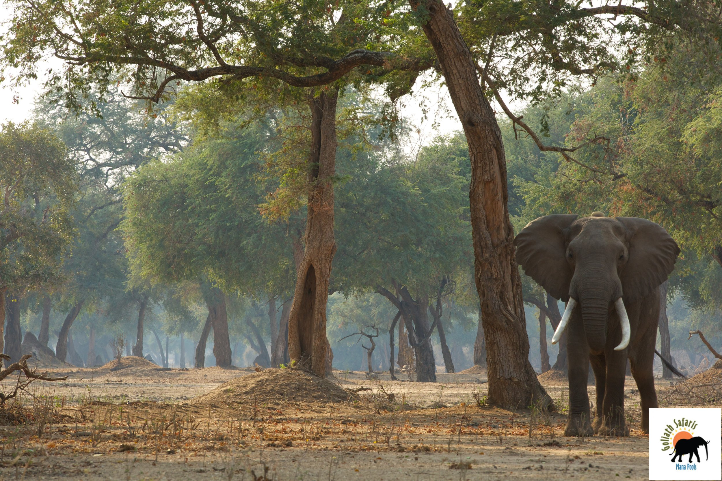 Vie sauvage au Goliath Safaris camp